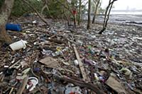 Polluted mangrove forest and beach littered with t