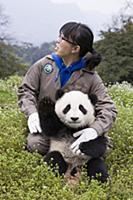 Восстановление популяции панд в Китае