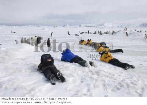 Императорские пингвины. Остров Сноу-Хилл.