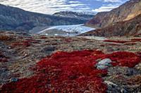 Tundra plants and glacier, Scoresby Sound, Greenla
