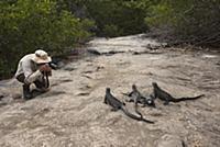 Marine Iguana (Amblyrhynchus cristatus) group phot