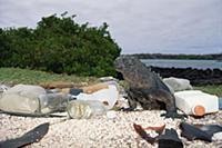 Marine Iguana (Amblyrhynchus cristatus) shares hab
