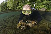 Изучение саламандр Северной Америки