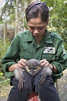 Douc Langur (Pygathrix nemaeus) orphan confiscated
