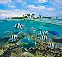 Parrotfish (Scaridae), Wrasse (Labridae), and Serg