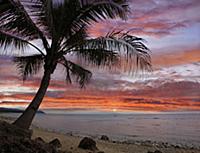 Coconut Palm (Cocos nucifera) at sunset near Dimia