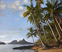 Palm trees on coast, Bacuit Bay near El Nido, Pala