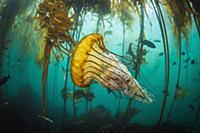 Подводная Калифорния