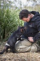 Tasmanian Devil (Sarcophilus harrisii) conservatio
