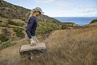 Santa Catalina Island Fox (Urocyon littoralis cata