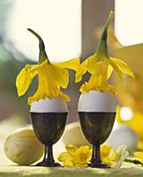 Eggs in egg-cups decorated with daffodils