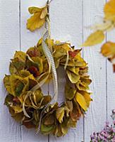 Parrotia and Prunus autumn leaves wreath