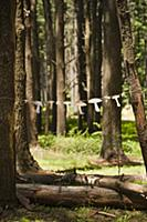 Garland of paper mushrooms hung between two trees