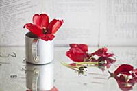 Red tulip in metal mug next to scattered petals an