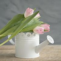 Pink tulips on top of white vintage-style watering