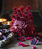 Red-dyed small teasel seed heads and Japanese mapl