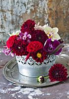 Dahlias and moth orchids