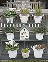 White plant pots and bird nesting box on plant sta