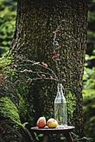 Larch branches in glass bottle in front of tree in