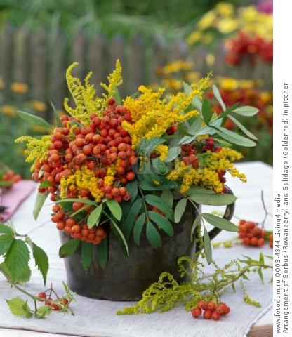 Arrangement of Sorbus (Rowanberry) and Solidago (Goldenrod) in pitcher