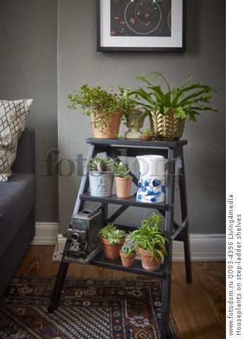Houseplants on step-ladder shelves