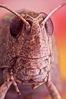 Великолепные макроснимки насекомых