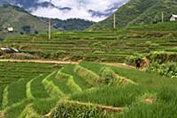 (5/30/2017)  Rice terraces nearby of Lao Chai vill