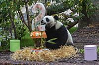 Giant panda Ding Ding tastes its birthday cake at