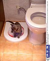 Reasons cats urinate outside box