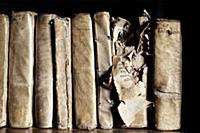 Подборка фотографий самых впечатляющих библиотек м