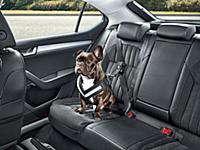 Skoda придумала ремень безопастности для собак