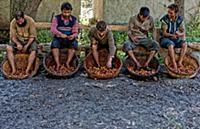 Ореховая промышленность Индии под угрозой