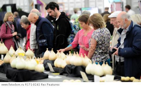 Mandatory Credit: Photo by Charlotte Graham/REX Shutterstock (5106761ai) Judging the Big Onions Harrogate Flower Show, Yorkshire, Britain - 18 Sep 2015