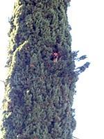 Спасение застявшей на дереве чихуахуа
