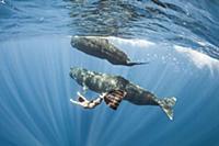 Подводные прогулки