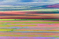 Красочные поля в Умбрии (Umbria), Италия (Italy) -