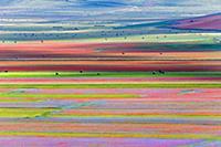 Красочные поля в Умбрии (Umbria), Италия (Italy).