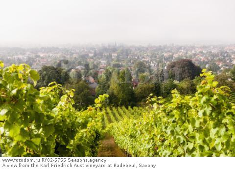 A view from the Karl Friedrich Aust vineyard at Radebeul, Saxony