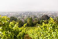A view from the Karl Friedrich Aust vineyard at Ra