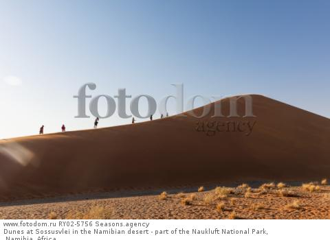 Dunes at Sossusvlei in the Namibian desert - part of the Naukluft National Park, Namibia, Africa