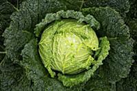 Beautiful cabbage