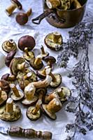 Freshly cut forest edible mushrooms on a towel and