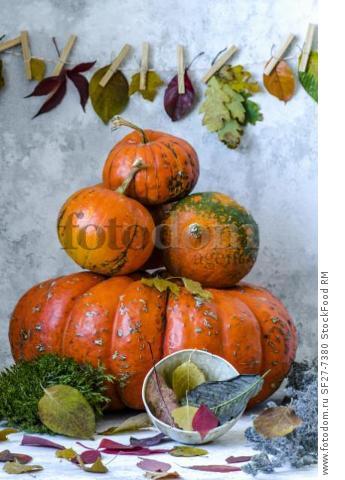 Four small pumpkins lie on a huge pumpkin