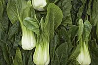Pak-choi cabbage