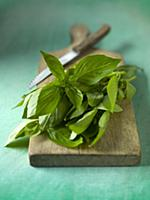 Fresh basil with a knife on a chopping board