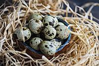 Common quail eggs in a bowl