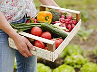 Woman holding crate of freshly picked vegetables i