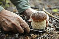 A man slicing a porcini mushroom in a forest