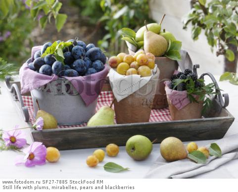 Still life with plums, mirabelles, pears and blackberries