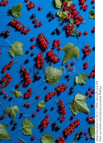 Red currants and blackcurrants flatlay